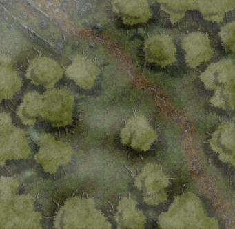 Fallowen Forest Ruins